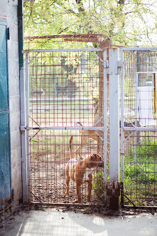 Dogs in the sun at the dog pound by Laura Stolfi for Stocksy United