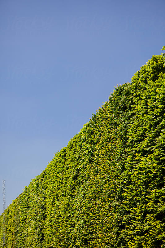 Hedge wall background by Mental Art + Design for Stocksy United