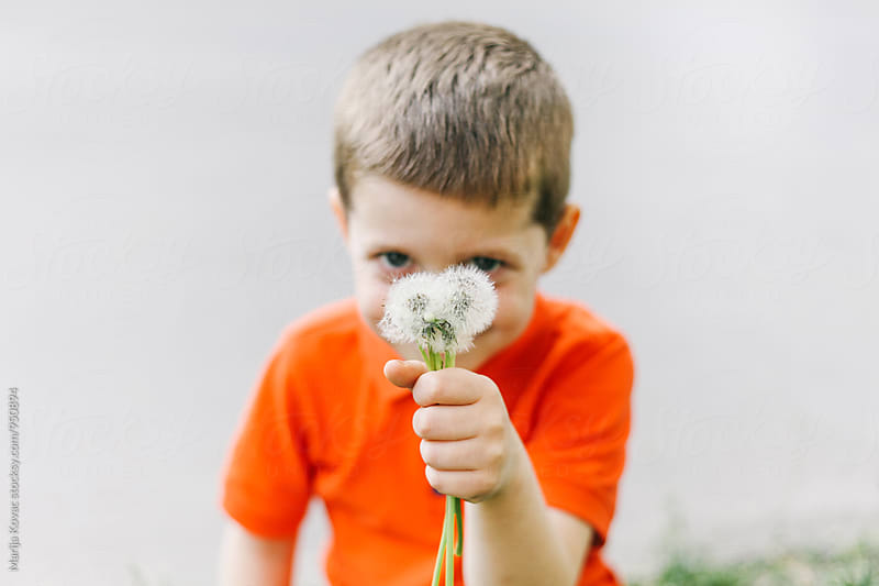 Cute kid holding dandelions by Marija Kovac for Stocksy United