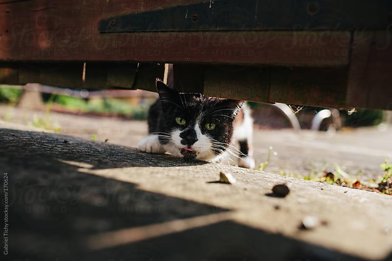 Cat looking beneath wooden door by Gabriel Tichy for Stocksy United