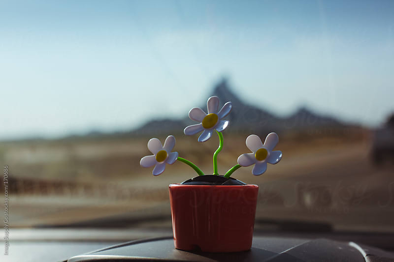 plastic flowers on dashboard with desert in background by Image Supply Co for Stocksy United