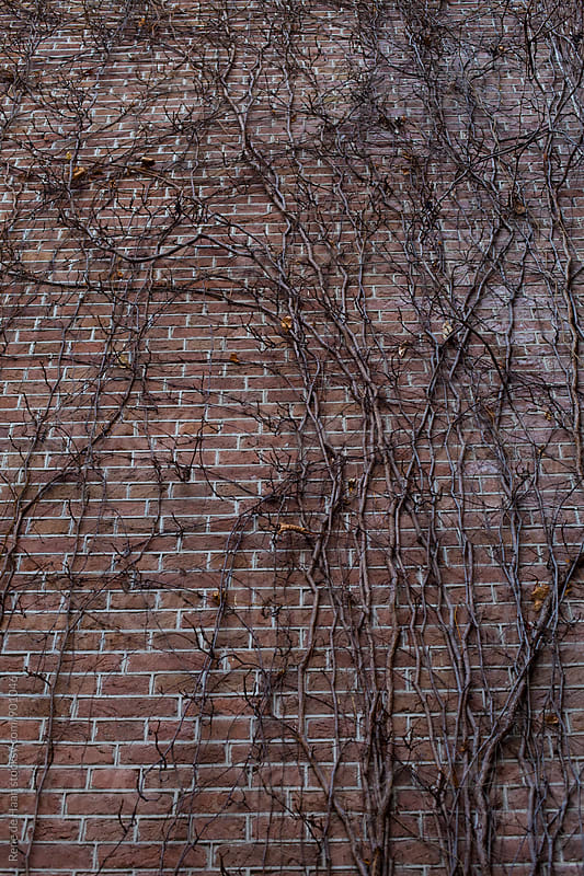 Tree growing on wall by Rene de Haan for Stocksy United