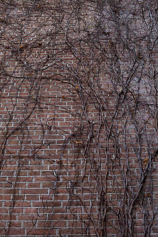 Tree growing on wall by Rene de Haan for Stocksy United