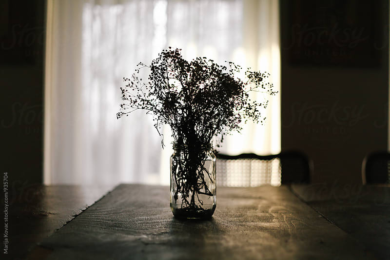 Flowers in a jar, contra light  by Marija Kovac for Stocksy United