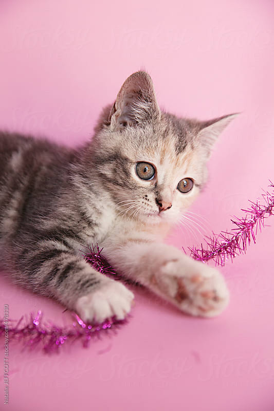 a young kitten plays with Christmas tinsel by Natalie JEFFCOTT for Stocksy United