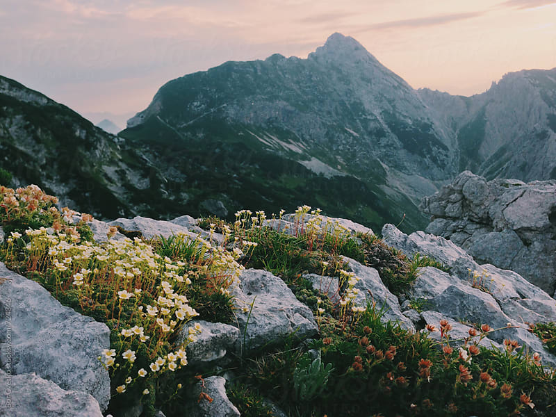 Mountain flowers in morning light by Bor Cvetko for Stocksy United