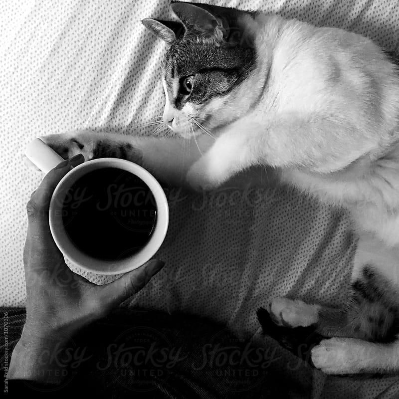 Morning kitten coffee by Sarah Reid for Stocksy United