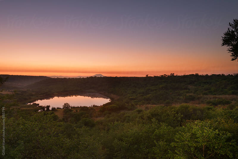 sunrise on the game reserve by Gillian Vann for Stocksy United