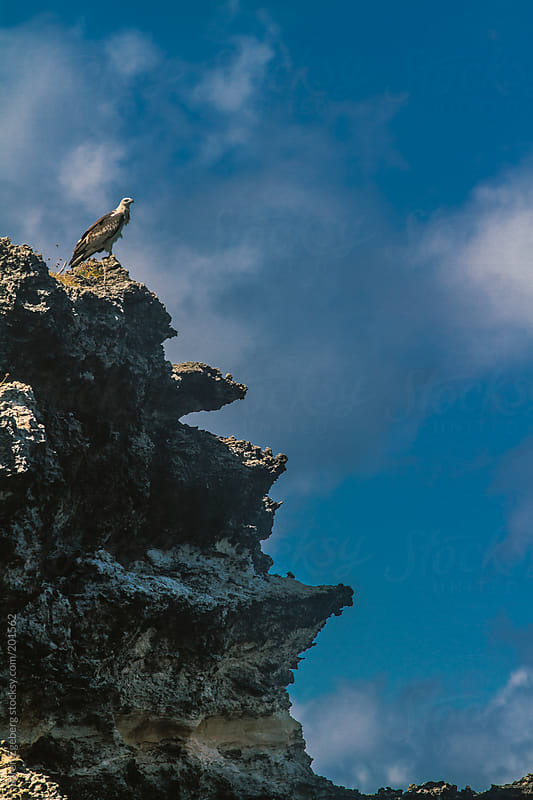 Eagle sitting on top of rugged sea cliff. by Soren Egeberg for Stocksy United