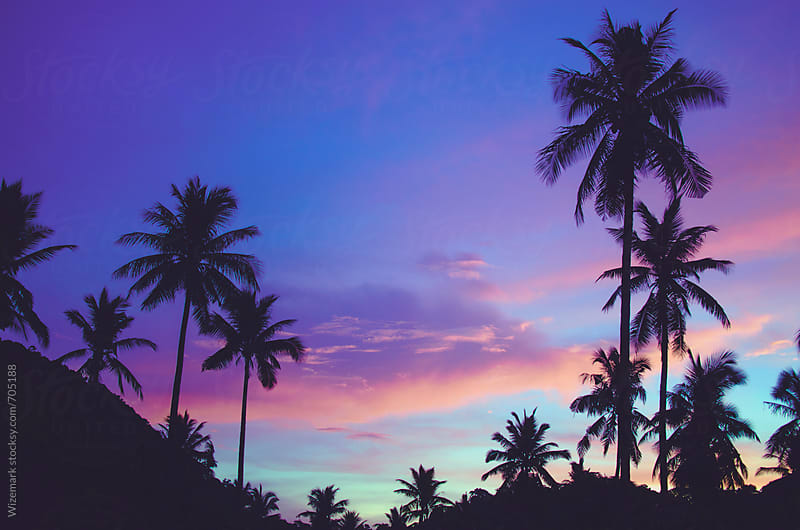 Summer silhouetted palm trees pattern during beautiful purple sunset by Srdjan Kirtic for Stocksy United