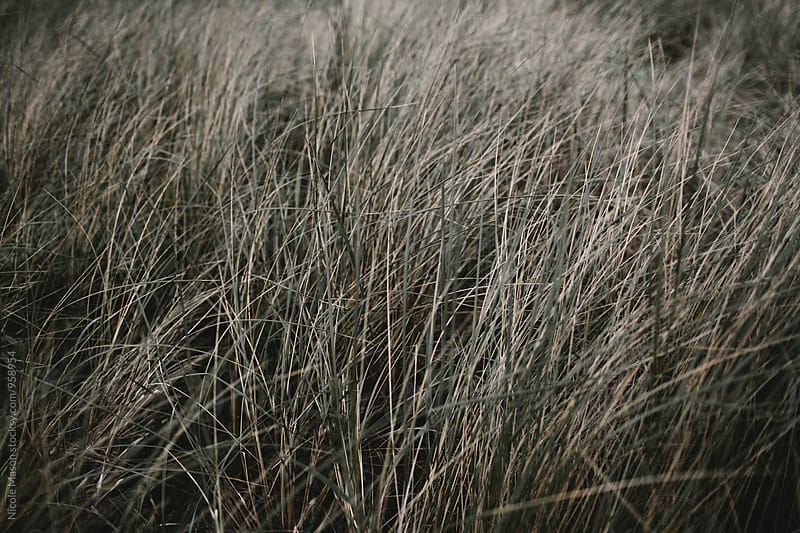 coastal grass on oregon beach by Nicole Mason for Stocksy United
