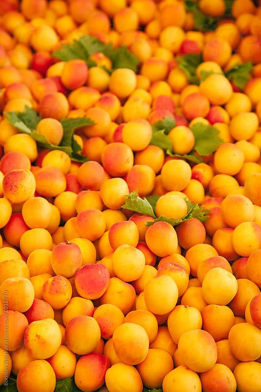 Fresh apricot on farmers market by Borislav Zhuykov for Stocksy United