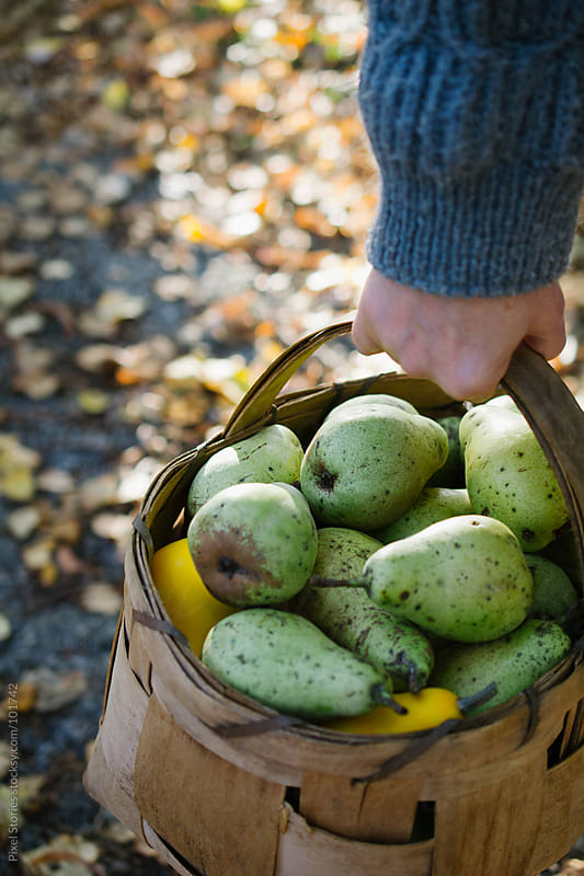 Woman carrying pears by Pixel Stories for Stocksy United