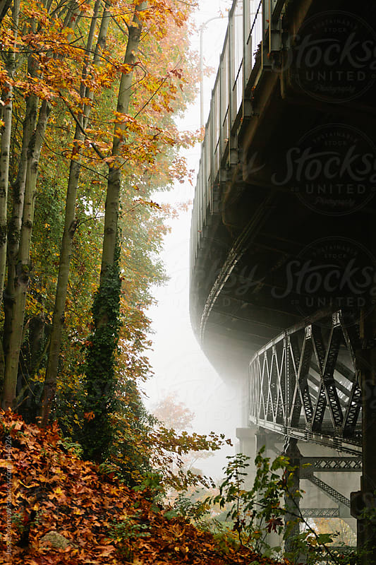 Trees and Bridge by Jesse Morrow for Stocksy United
