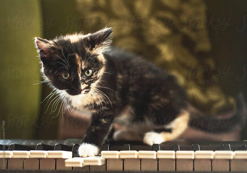 Kitten on a piano. by Darren Muir for Stocksy United