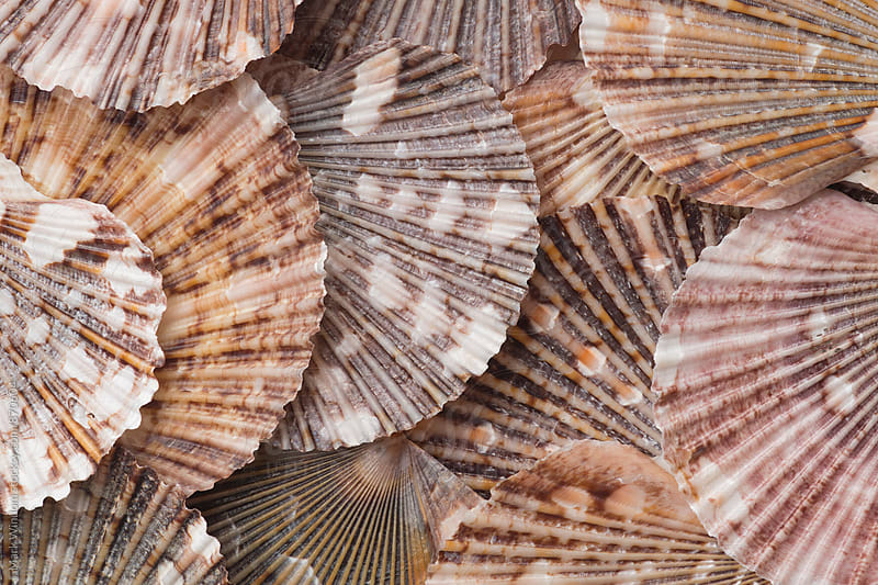 Scallop shell collection, closeup by Mark Windom for Stocksy United
