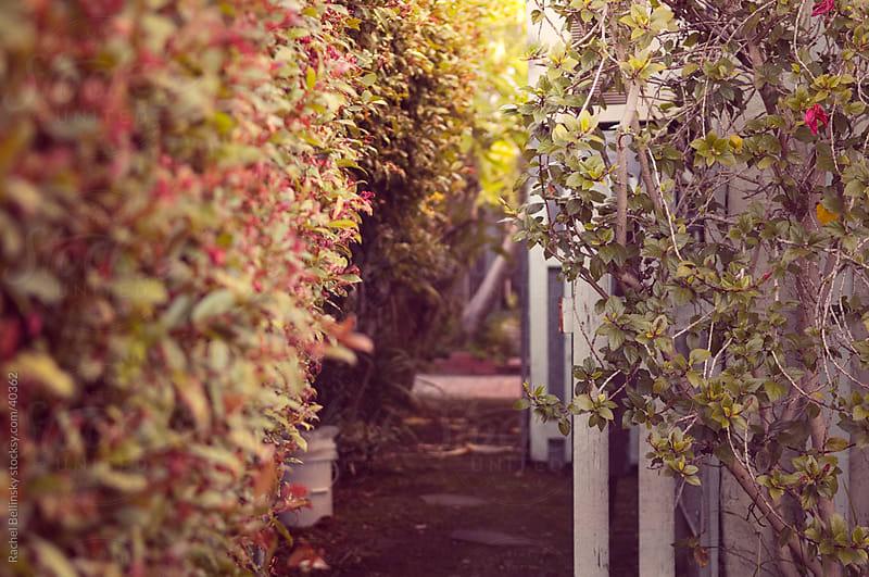Small garden space enshrouded by sunny shrubs by Rachel Bellinsky for Stocksy United