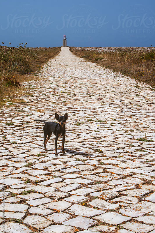 Dog, road and lighthouse by ACALU Studio for Stocksy United