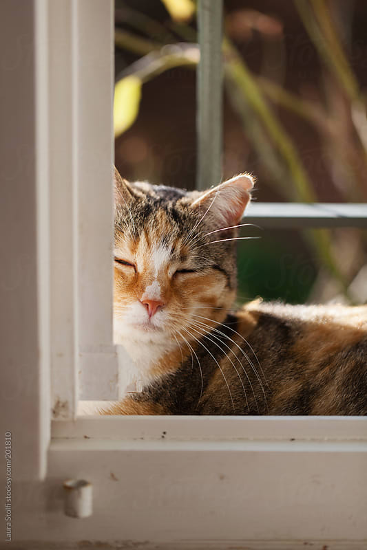 Cat lying outside on windowsill and bathing in the sun with blissful look by Laura Stolfi for Stocksy United