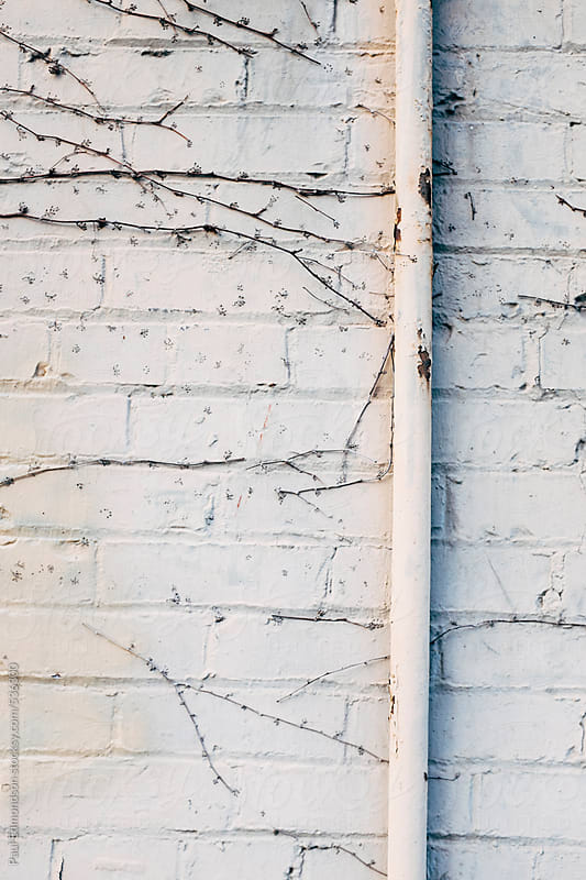 Metal pipe and vines on painted brick wall, close up by Paul Edmondson for Stocksy United