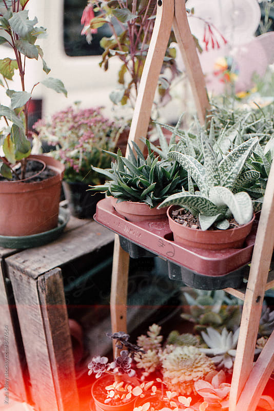 Cacti & Succulents for sale by Kara Riley for Stocksy United