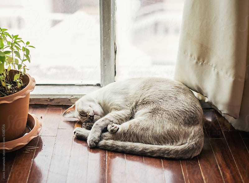Cat sleeping curled up on the floor. by Jovo Jovanovic for Stocksy United