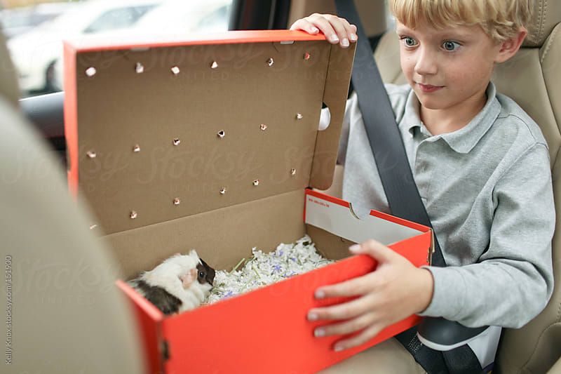 boy bringing home baby guinea pig by Kelly Knox for Stocksy United
