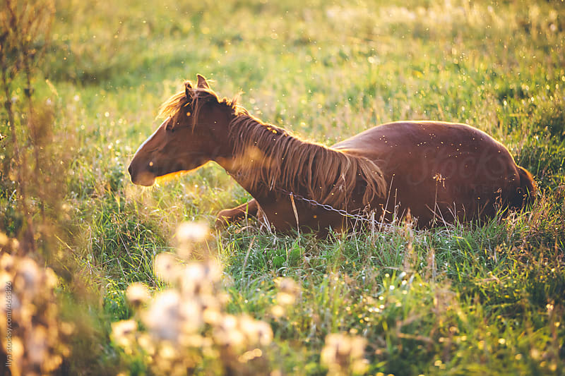 Horse grazing in meadow in sunlight on sunset by Ilya for Stocksy United