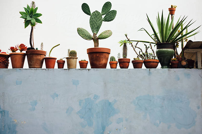 Row of Cacti  by Kara Riley for Stocksy United