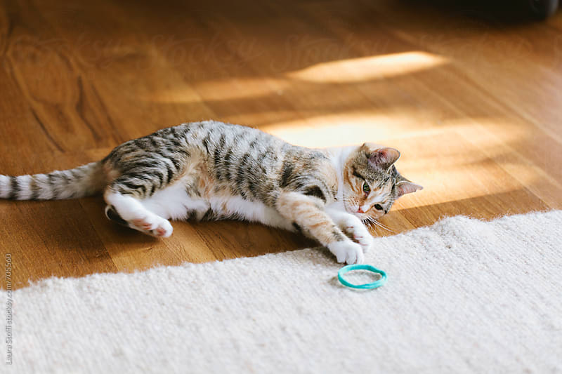 Cat laying and playing with ribbon in living room by Laura Stolfi for Stocksy United