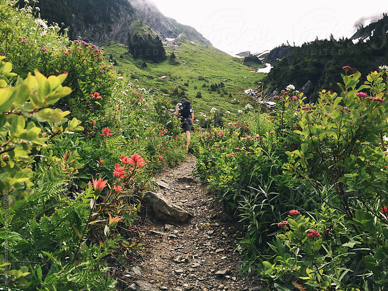 Male Hiker/Backpacker on an Alpine Meadow Trail in Washington by michelle edmonds for Stocksy United