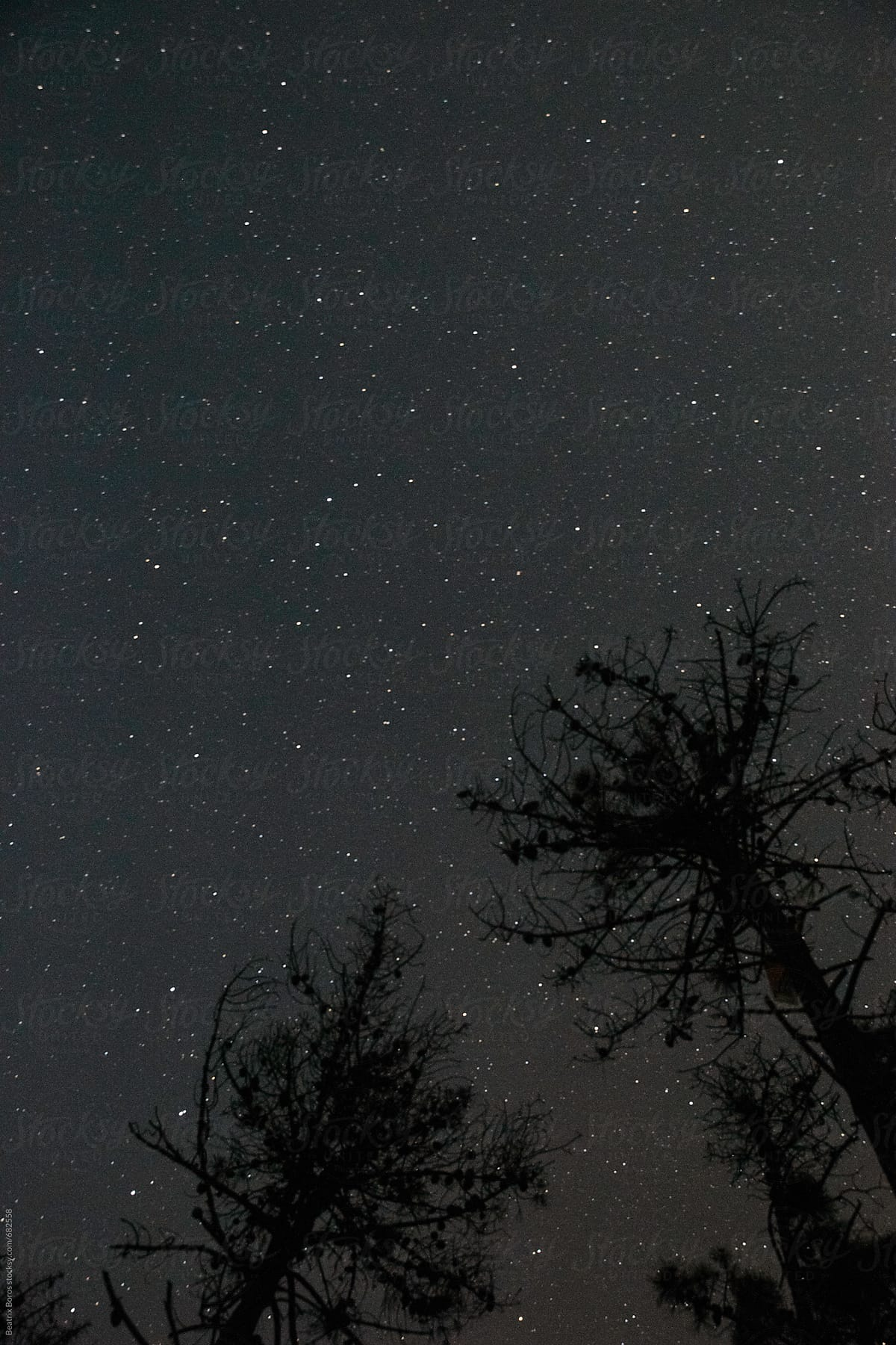 Dark starry night sky with two stone pine silhouettes by Beatrix