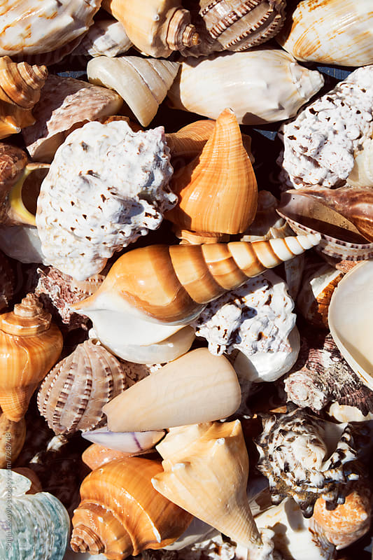 various shells background by Sonja Lekovic for Stocksy United
