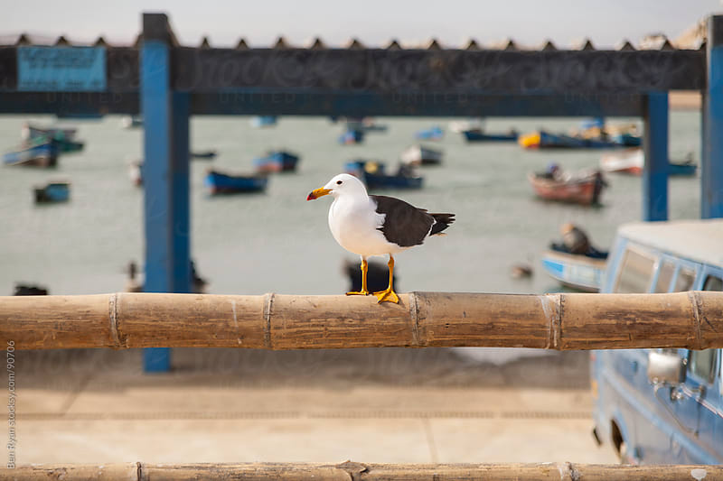 Pacific seagull perched on a rail in a small fishing village by Ben Ryan for Stocksy United
