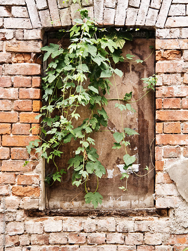 Window nook in decaying wall, overgrown with green leaves by Melanie Kintz for Stocksy United