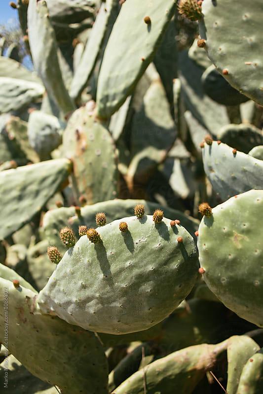 Cactus in nature by Marko Milovanović for Stocksy United