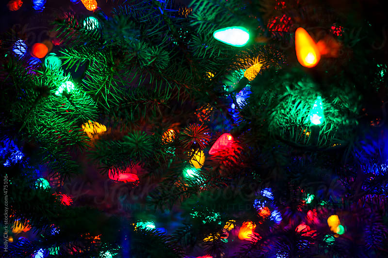 Christmas lights on an outdoor tree at night. by Holly Clark for Stocksy United