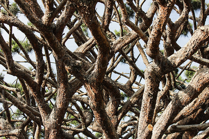 Close-up of the branches on a huge tree by ZOA PHOTO for Stocksy United