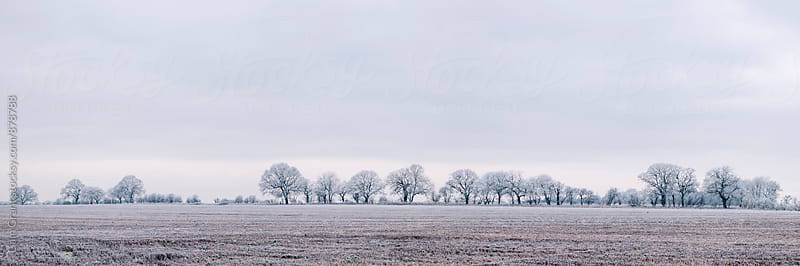 Rural scene covered in a thick hoar frost. Norfolk, UK. by Liam Grant for Stocksy United