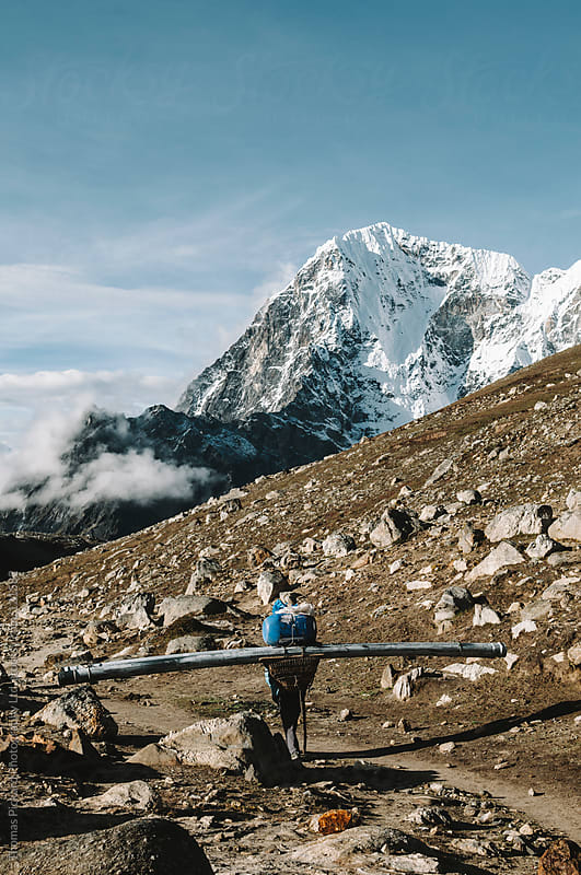 Sherpa carrying a huge load, Everest Region, Sagarmatha National Park, Nepal. by Thomas Pickard Photography Ltd. for Stocksy United
