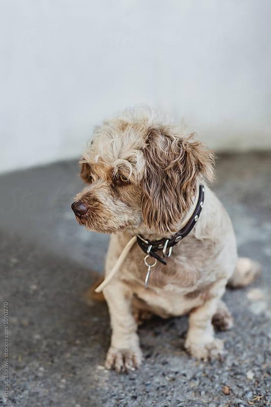 Dog by Tatjana Ristanic for Stocksy United