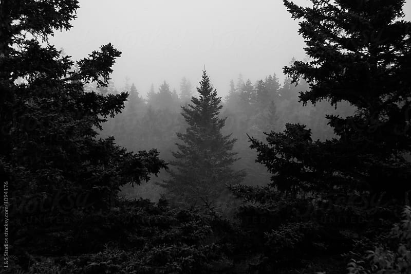 Foggy trees by L&S Studios for Stocksy United