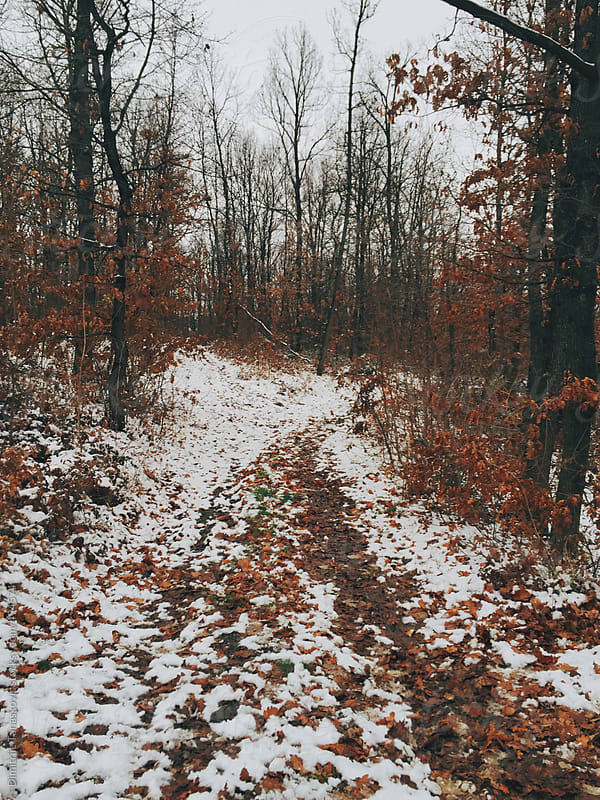 Deciduous forest in the winter by Dimitrije Tanaskovic for Stocksy United