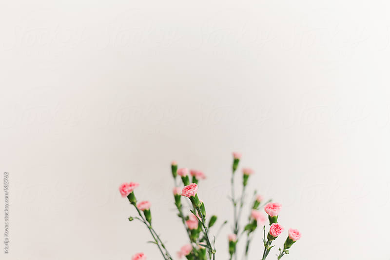 Pink flowers, indoor by Marija Kovac for Stocksy United