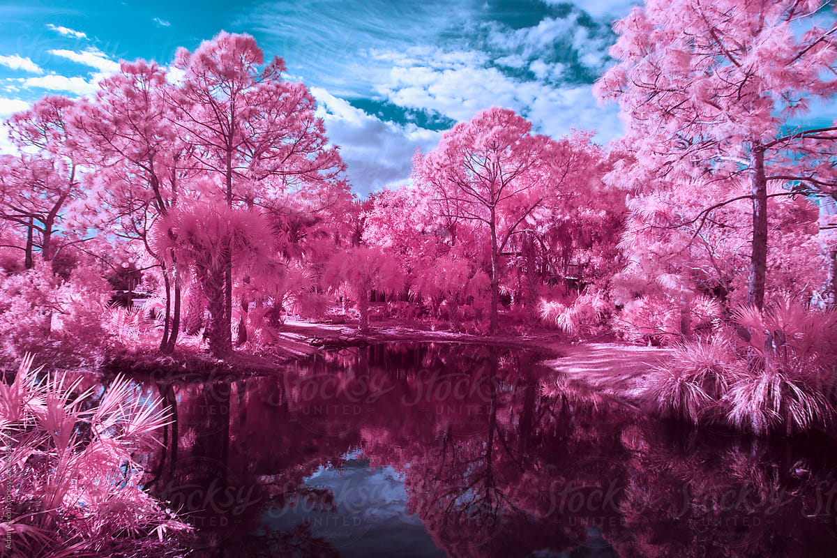 Black Water Lake And Pink Trees By Adam Nixon Infrared