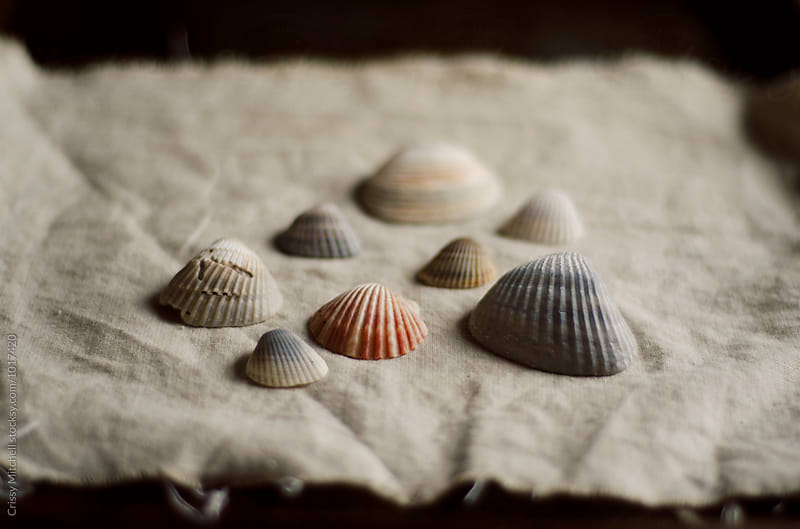 sea shells by Crissy Mitchell for Stocksy United