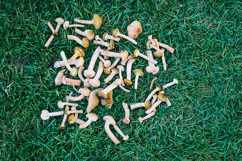 Fresh Mushrooms on the grass by GIC for Stocksy United