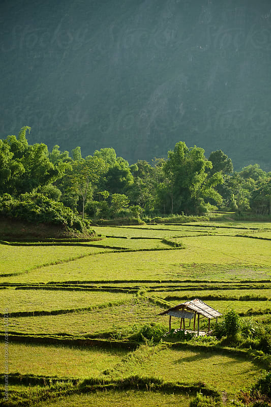 Rice Fields Landscape in Central Laos by Goldmund Lukic for Stocksy United