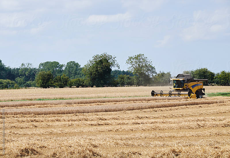 Combine Harvester working in a field. Norfolk, UK. by Liam Grant for Stocksy United