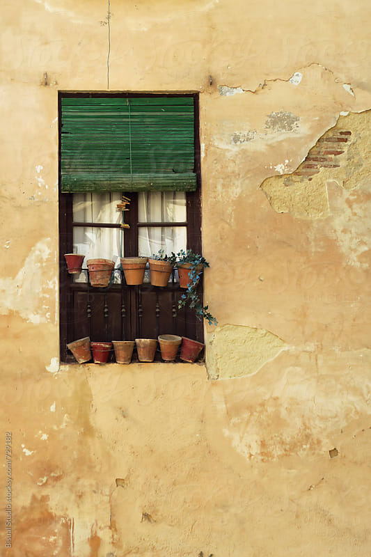 Window with flowers and plants in Granada by Bisual Studio for Stocksy United